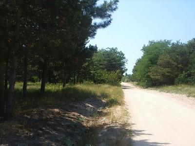 дорога, проходящая по сосновому заповеднику - 08062818_resize.JPG