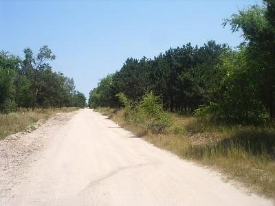 Заповедный сосновый лес - 08062820_resize.JPG