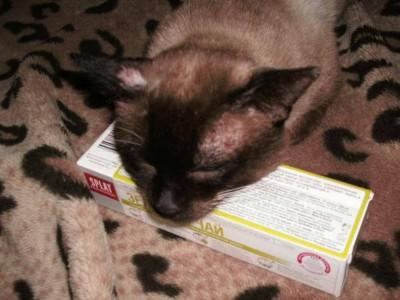 Ищу своего тайского котика - GEDC0597.JPG