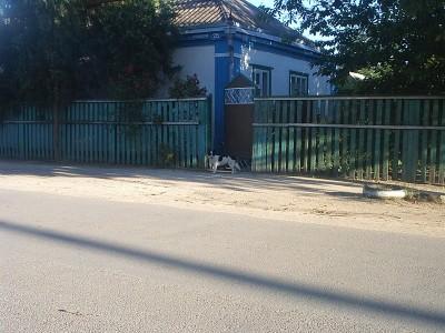 А собаки в Должанке маленькие - 08062708_resize.JPG