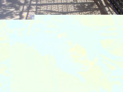А собаки в Должанке маленькие - 08062807_resize.JPG